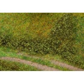 Feuillage de terrain vert été